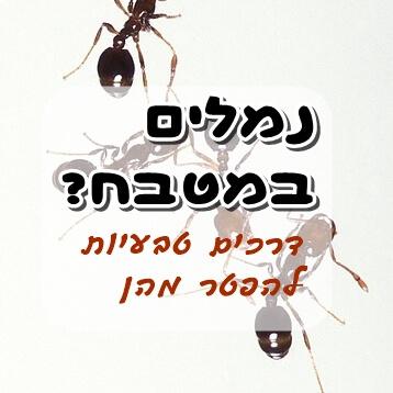 איך להיפטר מנמלים בדרכים טבעיות