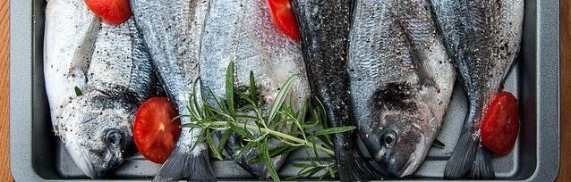 מדריך בחירת דגים